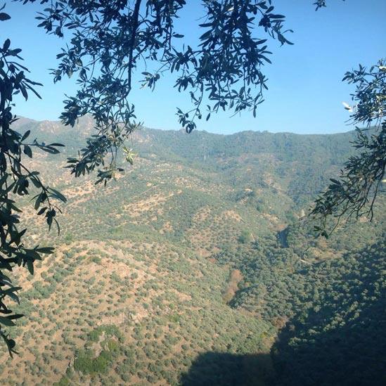 Memecik'in Anavatan Toprağı